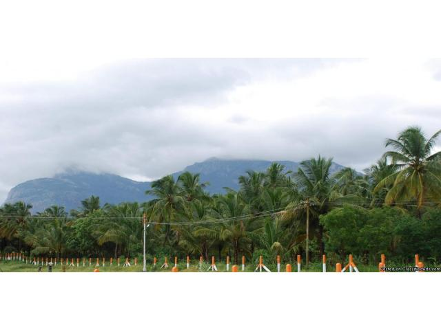 Agricultural Land with Coconut Farm is Sale in Pollachi