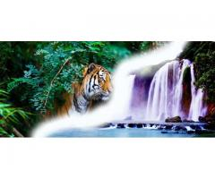 ABD Holidays- One of the Best Travel Agent in Haridwar