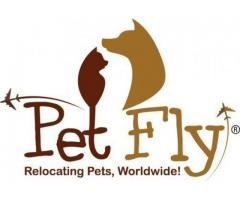 Pet Relocation | Pet Moving Services
