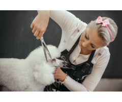Dog Grooming Classes Online
