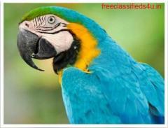 Birds for Sale.