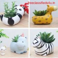 Buy Plants Online In India | Flowering Nursery Plants- Clayie.Com