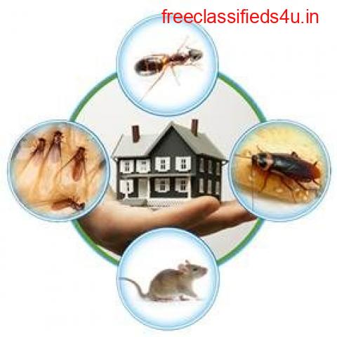 Looking For The Best Pest Control Services in Faridabad, Gurgaon and Delhi NCR.