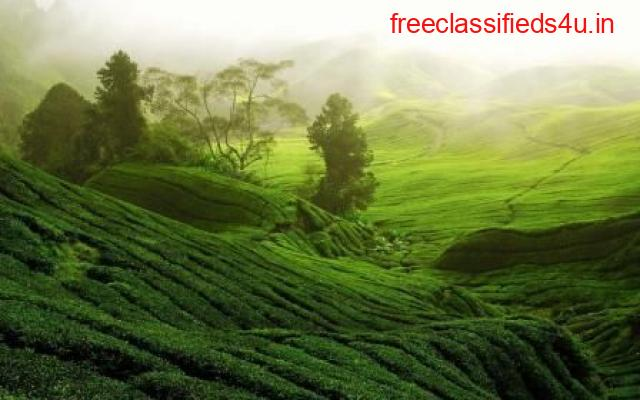 Get Best Tea gardens ready to sell in various parts of North Bengal