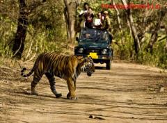 Wildlife Tour Packages in India |Wildlife Tour Operators in india