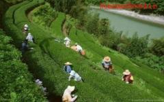 Get Amazing Tea Garden in Doors Ready To be Sold