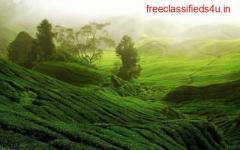 Tea garden for Sale in Darjeeling and Doors at Best Prices
