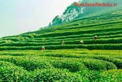 Best Investment Assistance for Buying Tea Gardens in Dooars