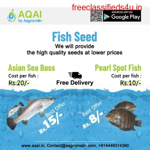 Asian Sea Bass Fish seed | fish seed | Sea fish seed
