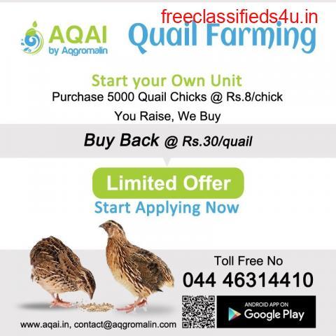Quail Unit Farm   quails   quail farm - Aqai