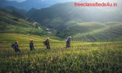 Purchase Best Tea garden in Darjeeling at Affordable Prices
