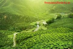 Purchase Tea Garden Sale in Dooars at Best Possible Prices
