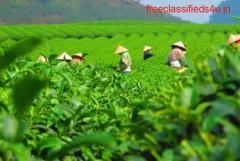 Buy Running Tea gardens for Sale in Dooars at Nominal Cost