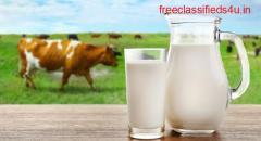Farm fresh milk Chennai