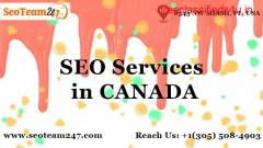Local to Global SEO Services   SEO Expert in Seoteam247
