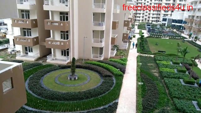 Apartment for Rent in Royal Nest   Rent Royal   Nest Flats